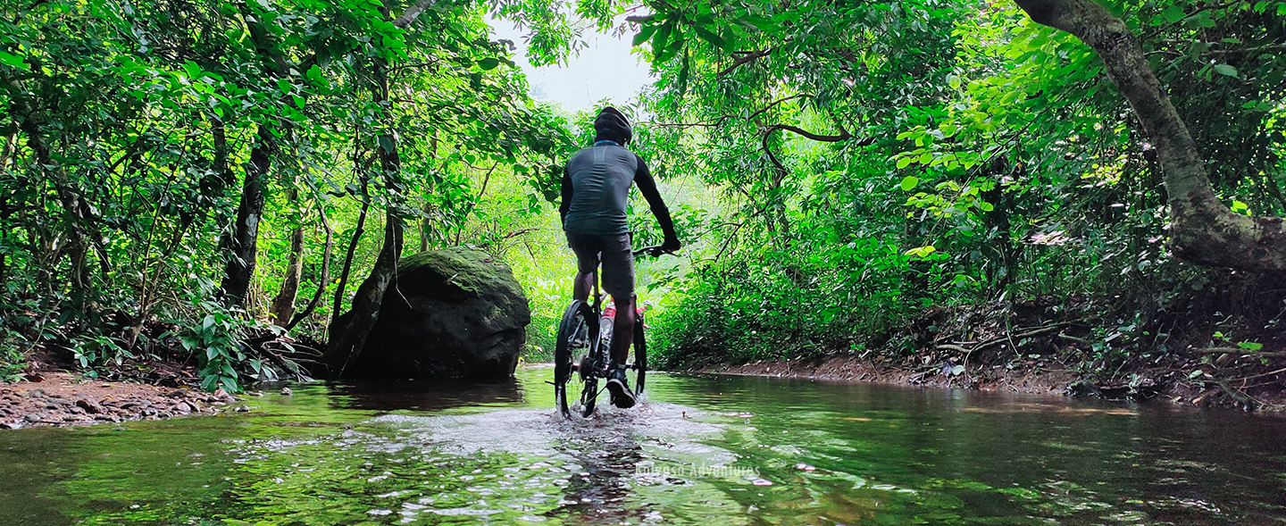 Rain forest cycling, Thattekkad