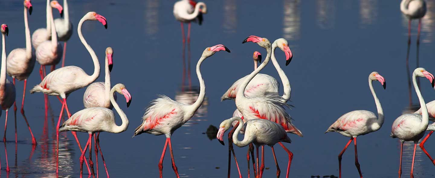 Gujarat Birding & Wildlife Tour